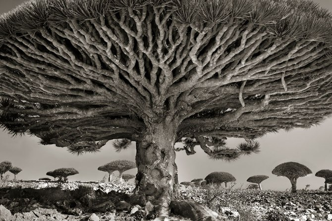 ancient-trees-beth-moon