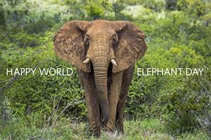 elephant-ecard
