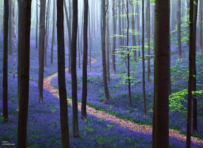 blueforest01