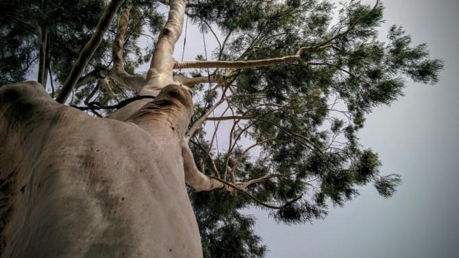 TelAvivTrees