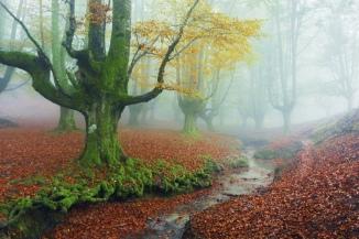 otzarreta-forest