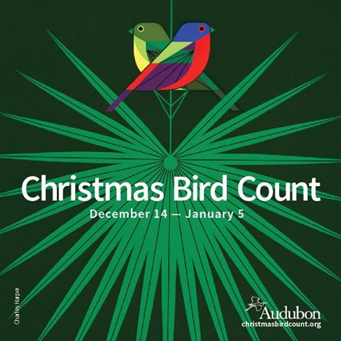 audubin_christmas_bird_count