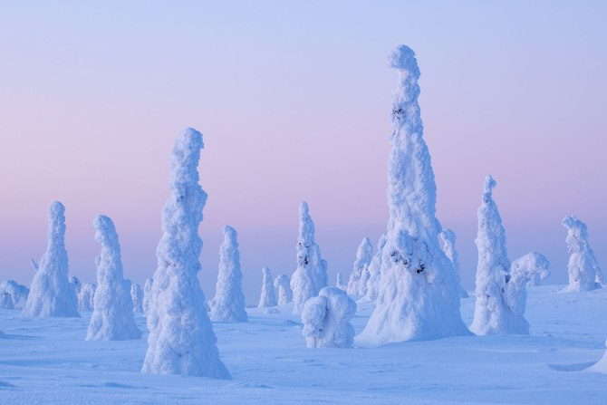 finland-snowy-trees-riisitunturi-national-park